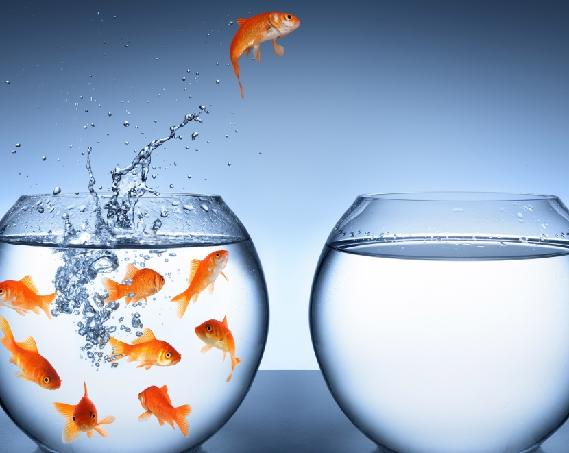 goldfish-jumping-improvement-and-career-concept.jpg